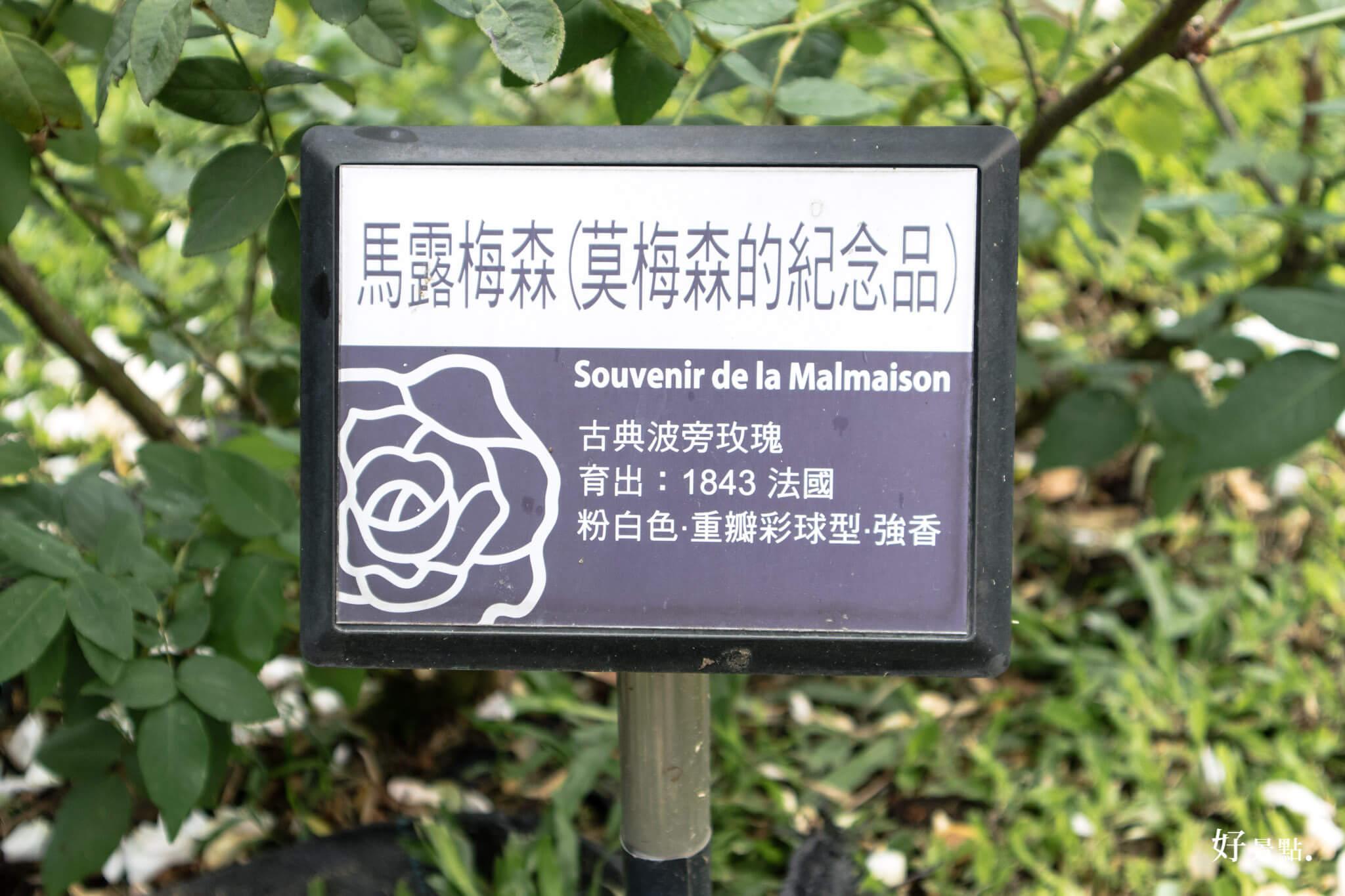 |台北。中山|花博新生園區 2017臺北玫瑰園-秋季玫瑰展