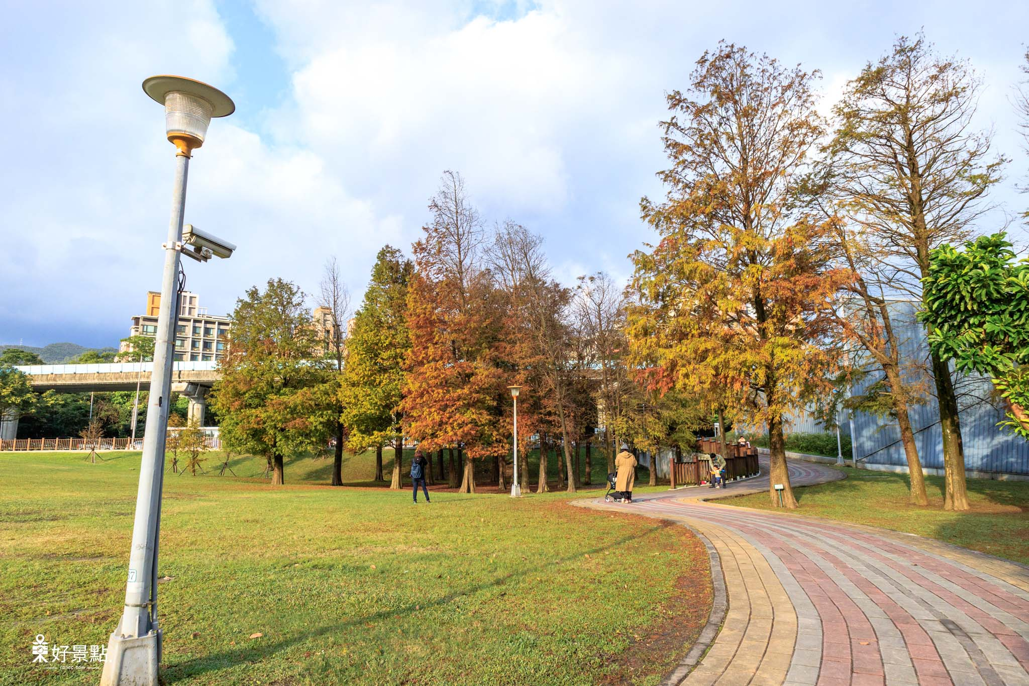 |台北。內湖|大湖公園落羽松-城市中的浪漫美景