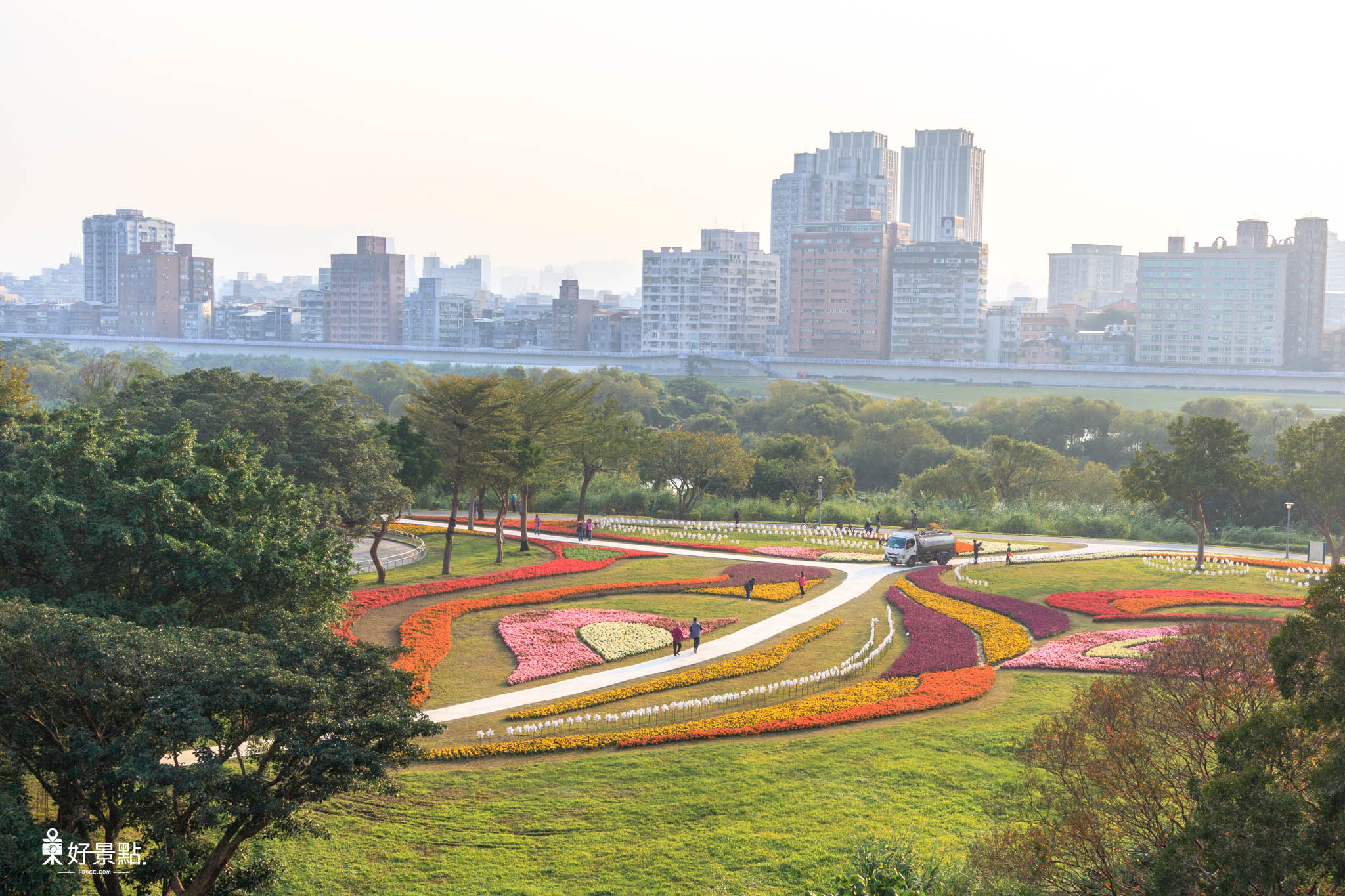 |台北。中正|古亭河濱公園花海綻放-城市中的浪漫花海美景
