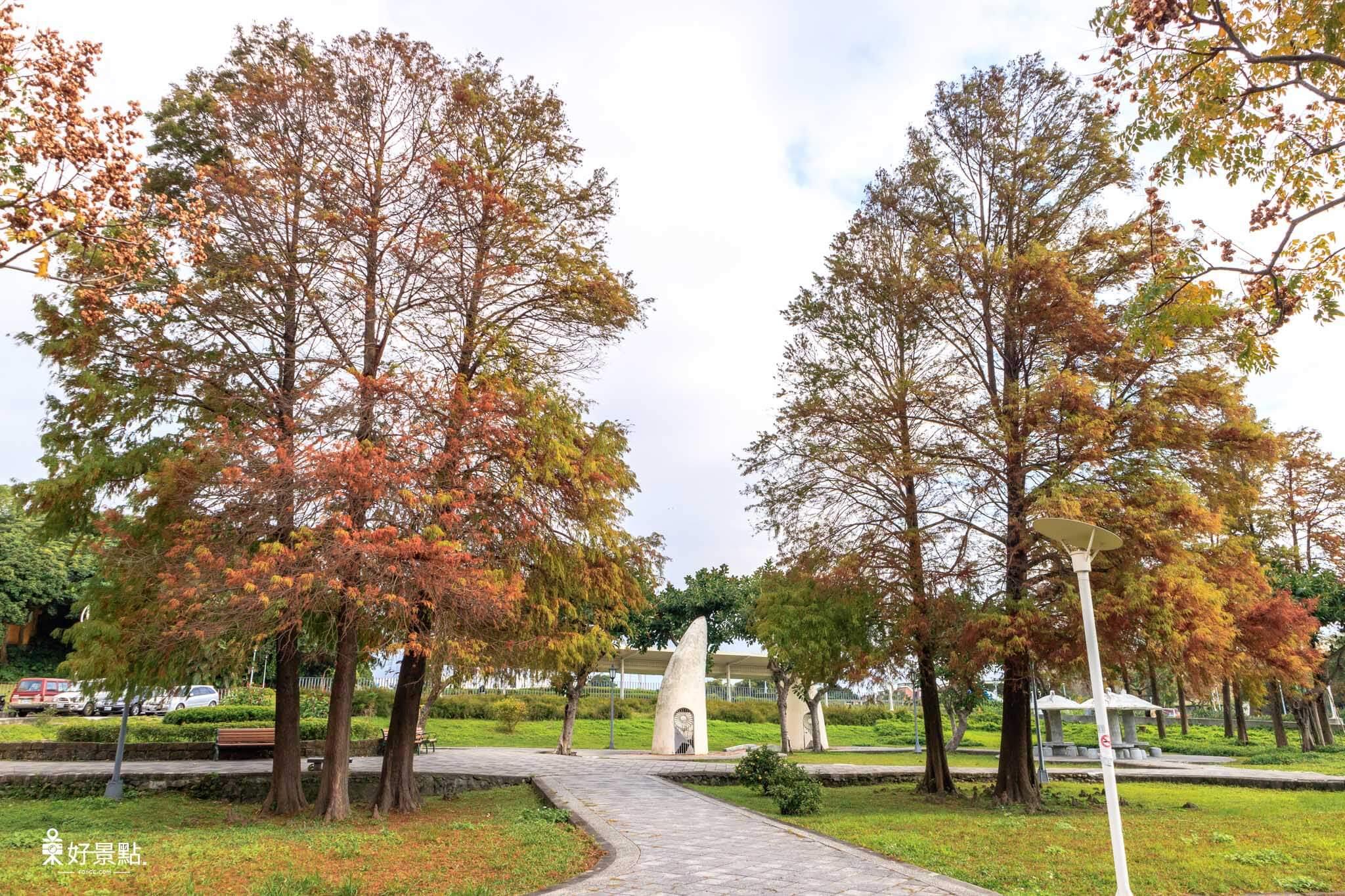 |台北。中山|圓山花博公園-落羽松