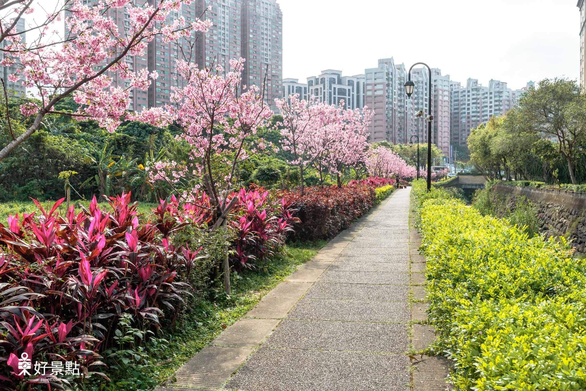 北投子溪櫻花林生態步道