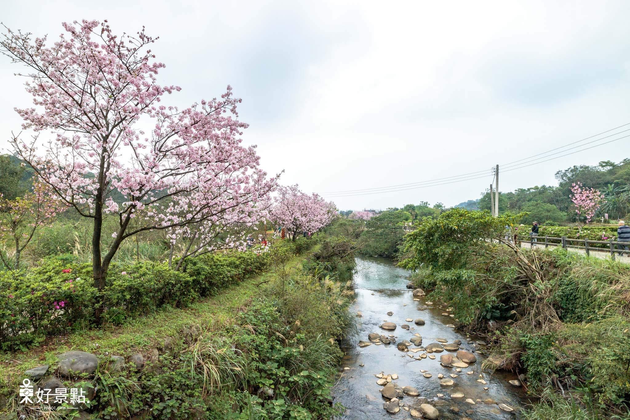  新北。三芝 三生步道賞櫻-2018三芝櫻花季