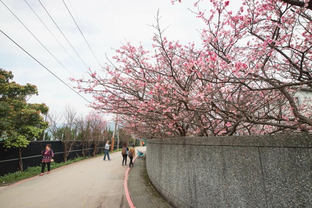 |台北。士林|平菁街42巷-漫步櫻花巷/公車搭乘方式